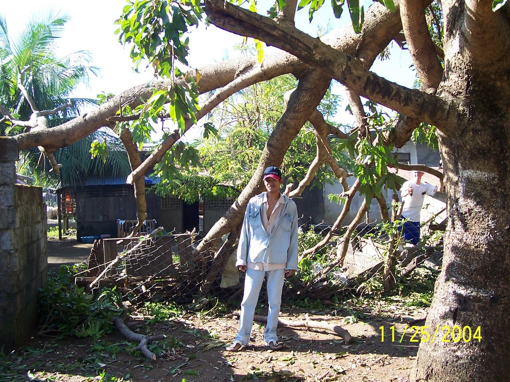 The Mango tree at the church after the typhoon