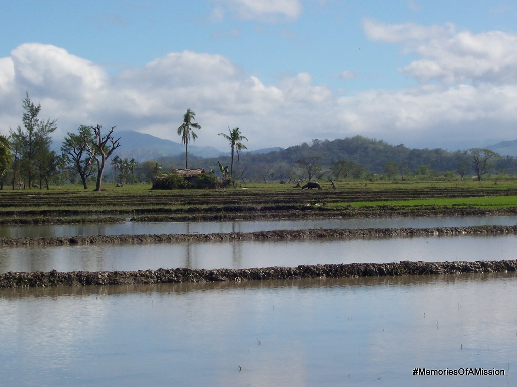 The rice fields where Bro Gregorio worked.