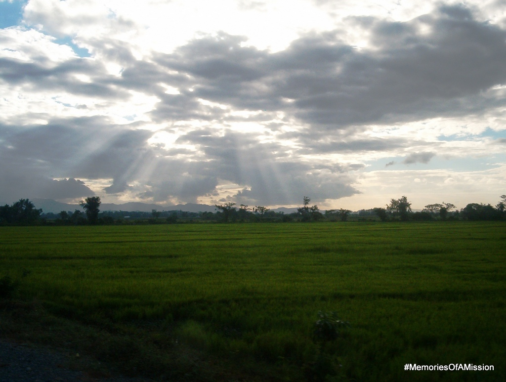 The sun over the rice fields